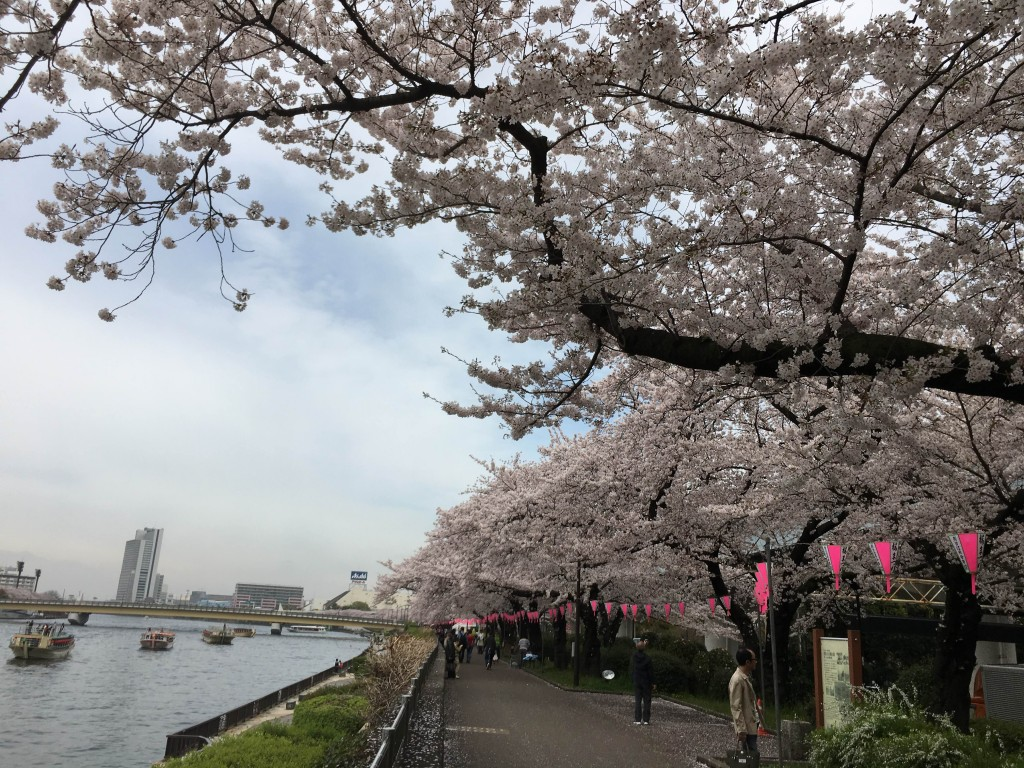 3桜ブログ